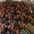 Vướng mắc về nhập khẩu gà thịt có xuất xứ Lào